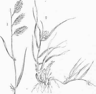 Outline Of Grass