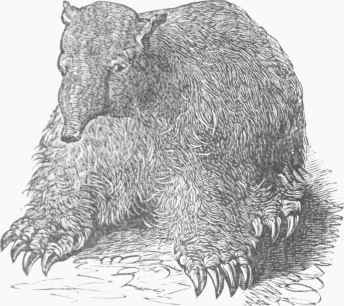 http://chestofbooks.com/reference/American-Cyclopaedia-7/images/Megatheriutn-restored.jpg