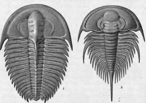 Plate II.   Cambrian Trilobites.