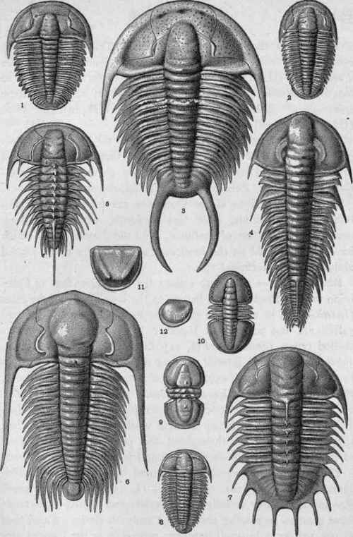 Cambrian Life Arthropoda